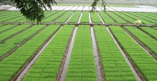 """金诚集团有机农业全产业链""""白鹭米""""只是第一步"""