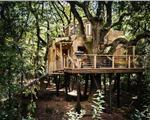 揭秘丛林中的豪华树屋